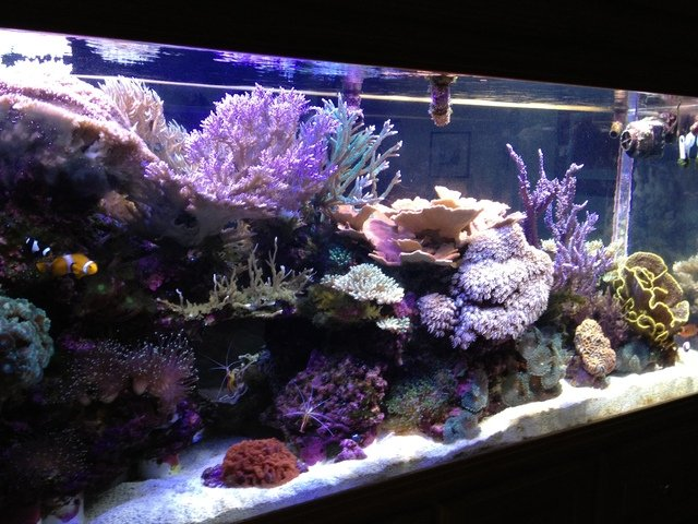 Relieve Stress In Your Business Or Home With An Aquarium